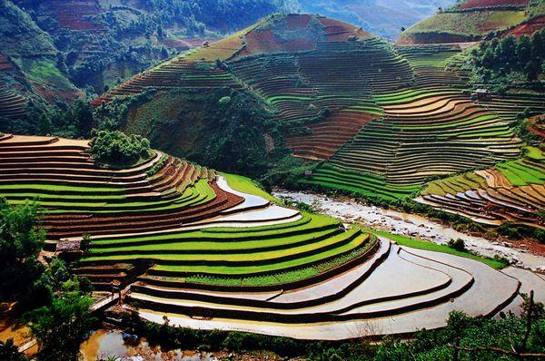 Los mejores campos de arroz